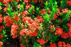 Blumenhintergrund und -beschaffenheit stockbild