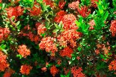 Blumenhintergrund und -beschaffenheit lizenzfreies stockbild
