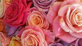 Blumenhintergrund voll von bunten altmodischen Pastellrosen Stockfotografie