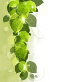 Blumenhintergrund von Blättern Lizenzfreies Stockfoto