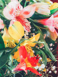 Blumenhintergrund von einem Blumenstrauß der bunten Blumenliliennahaufnahme Lizenzfreie Stockfotos