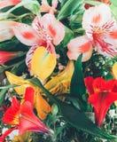 Blumenhintergrund von einem Blumenstrauß von bunten Blumenlilien, Nahaufnahme Stockbilder
