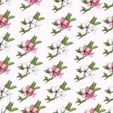 Blumenhintergrund von empfindlichen Aquarellblumen stock abbildung