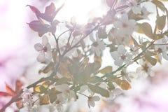 Blumenhintergrundbeleuchtung stockfotografie