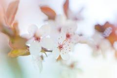 Blumenhintergrundbeleuchtung stockfoto
