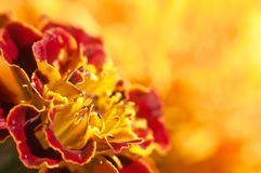 Blumenhintergrundnahaufnahme Stockbild