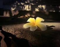 Blumenhintergrundweinlese Stockfoto