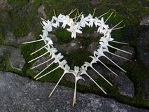 Blumenhirsch Stockbild