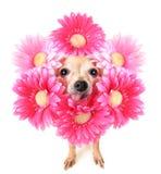 Blumenhund stockbild