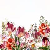 Blumenillustration mit Feldblumen und -tulpen Lizenzfreie Stockfotos