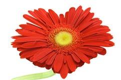 Blumeninneres Stockfoto