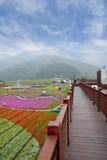 Blumenjahreszeit von Taiwan Lizenzfreie Stockfotos