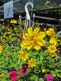 Blumenkörbe Stockfotografie