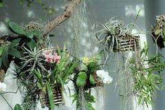 Blumenkörbe Lizenzfreies Stockbild