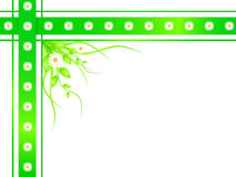 Blumenkamillenrand Lizenzfreies Stockbild