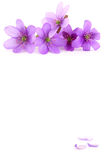 Blumenkarte Lizenzfreie Stockfotografie