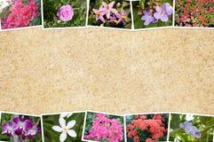 Blumenkarte auf Schmutzbraunhintergrund Stockfoto