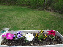 Blumenkasten lizenzfreie stockfotos