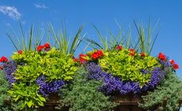 Blumenkasten mit blühenden Pflanzen stockbilder