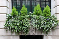 Blumenkasten mit kleinen Nadelbäumen Stockbilder