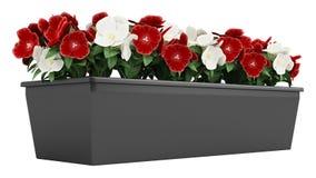 Blumenkasten von Madagascan Singrün Lizenzfreie Stockfotografie