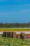 Blumenkisten auf einem bebauten Blumengebiet Stockfotos
