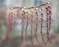 Blumenknospe in den Spalten Lizenzfreie Stockfotos