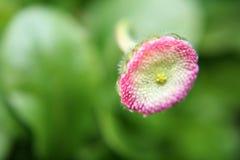 Blumenkopf stockfoto