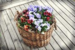 Blumenkorb Lizenzfreie Stockfotos