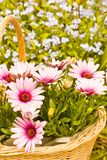 Blumenkorb Lizenzfreies Stockbild