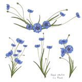 Blumenkranz mit stilisierten blauen Blumen von Kornblumen und von Grünblättern Lizenzfreies Stockbild
