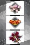 Blumenkubismus 2 Lizenzfreies Stockfoto