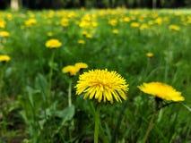 Blumenlächeln lizenzfreie stockbilder