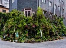 Blumenladen mit vielen Grünblumen und Bäume und Anlagen stockfotografie