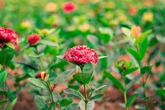Blumenlager Lizenzfreie Stockfotos