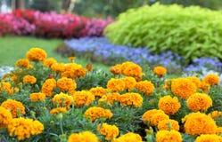 Blumenlandschaftsgestaltung Stockfotos