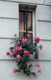 Blumenleistung 1 Stockfotos