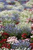 Blumenleistung Stockbild
