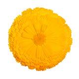 Blumenleistung stockfoto