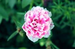 Blumenliebhaber Stockfoto