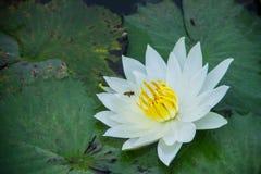 Blumenmagie Lizenzfreie Stockfotos