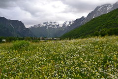Blumenmagie Lizenzfreies Stockbild