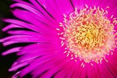 Blumenmakro lizenzfreie stockbilder