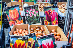 Blumenmarkt in Amsterdam Lizenzfreies Stockbild