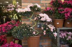 Blumenmarkt in den Hong Kong-Bonsaibäumen lizenzfreie stockbilder
