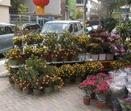 Blumenmarkt in den Hong Kong-Zitrusfruchtbäumen lizenzfreie stockfotos