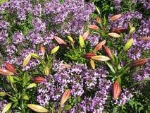 Blumenmeer Lizenzfreie Stockbilder