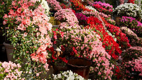 Blumenmeer Stockbild