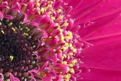 Blumenmitte Stockbild