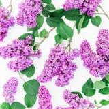 Blumenmuster der purpurroten Flieder und der Blätter auf weißem Hintergrund Flache Lage, Draufsicht Sommermuster Lizenzfreies Stockfoto